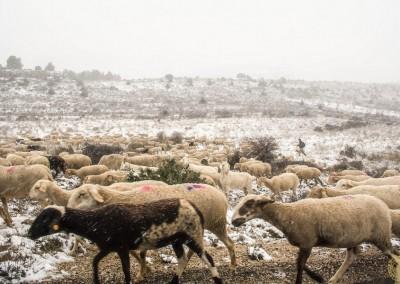 Fotos de Nerpio Restaurante Hostal Rural Albacete 23